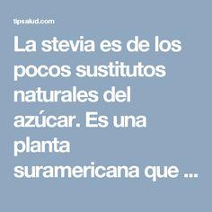 La stevia es delos pocos sustitutos naturales del azúcar. Es una planta suramericana que fue muy utilizada por los indios de Paraguay y del Brasil por siglos.Asimismo es llamada hoja dulce por su sabor y es exactamente por tal razón…