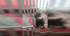 Rescue Dog Naps In Bed With Toddler In Adorable Viral Video via LittleThings.com