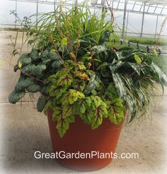 www.greatgardenplantsblog.com wp-content uploads 2011 12 Shade-container-with-Carex_Tiarella_Pulmonara_Brunnera.jpg