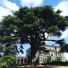 This Cedar of Lebanon tree sits on the South Lawn of the Hedsor House estate. The famous tree is hundreds of years old and a very loved part of 100 acre estate. Lebanon Tree, Hedsor House, Georgian Mansion, Meeting Venue, Country House Wedding Venues, Heathrow Airport, Manor Houses, Team Building, Event Venues
