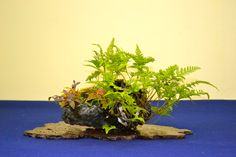 Kusamono Japanese | There were a number of kusamono in three-point displays with suiseki ...
