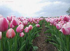 gifs de flores em movimento - Pesquisa Google