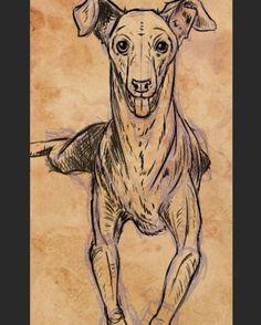 3/5 - Then I start adding crosshatching for shadows.  #seenunseenbook #dog #dogart #pet #petart #whippet #greyhound #italiangreyhound #sighthound #dogsofinstagram#art #sciart #illustration #animal #wildlifeart #sketch #animalart #sketchbook #drawing #nature #artwork #zoo #scienceart #womeninart #ebook #illustratedbook