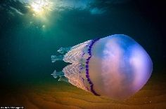 During the day, Jordi Benitez Castells works in a bank, surrounded by numbers and roles. But in his free time, this Spanish amateur photographer picks up his camera and dives off the coast of …