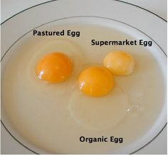 All Eggs are Not Created Equal