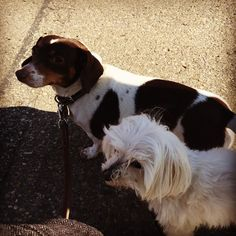 #rip Toscanini. You were a good sister good friend and good dog. #rainbowbridge