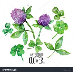 flowering clover watercolor - Google Search