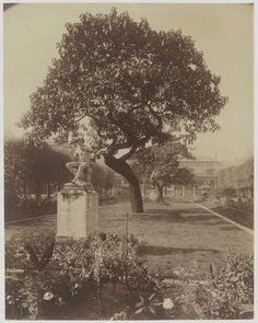 eugène Atget Paris jardins du Palais royal 1904