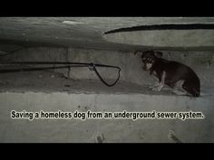 Dog rescued from living in a sewer, looking for a home