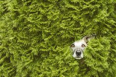 "HedgeTroll - For licensing requests:  info@elkevogelsang.com <a href=""https://www.facebook.com/elke.vogelsang/"">FACEBOOK</a> 