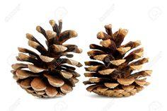 Afbeeldingsresultaat voor pinterest denappels