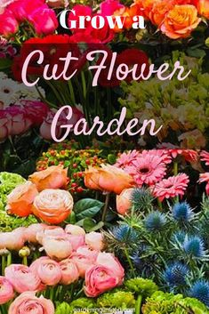 How to Grow an Amazing Cut Flower Garden Do you love bouquets and centerpieces, but don't want to buy them? Grow a cut flower garden! Get some great tips on what and how to grow cut flowers here! Cut Flower Garden, Beautiful Flowers Garden, Flower Farm, Beautiful Gardens, Flower Gardening, Cut Garden, Small Flower Gardens, Amazing Flowers, Container Gardening