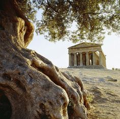 As I'm told now by my father, I was a very nice drill instructor taking him from place to place, lol. Valle dei Templi, Agrigento, Sicilia - Italy @Joyce Gross @Karla Gross