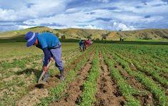 Danilo Medina felicitó a los agricultores, al celebrarse este domingo 15 el Día del Agricultor y afirmó que en ellos reside el mejor ejemplo de trabajo