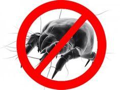 Huisstofmijtallergie? Zo bestrijd je de huisstofmijt: http://www.ikzoekeenschoonmaakster.nl/blog/huisstofmijt-allergie/