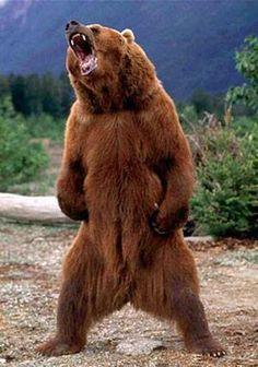 Медведь --А Что Паёт,..Ум Новй Факт