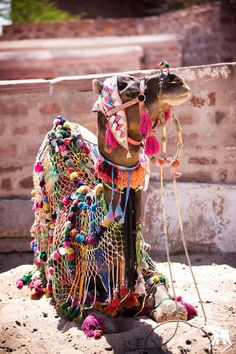 Colorful Camel!!