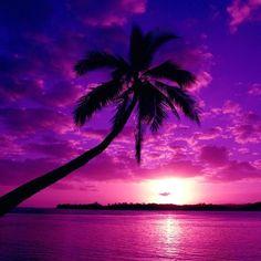 A brilliant purple sky during sunset. This pic is beautiful! Beautiful Sunset, Beautiful World, Beautiful Places, Trees Beautiful, Simply Beautiful, Absolutely Stunning, Image Zen, Purple Sunset, Purple Beach
