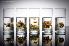 Display Tea, flickr