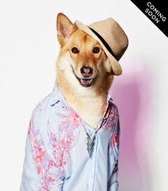 The American Beagle Outfitters Look Book Is a Dog Lover's Dream I Love Dogs, Puppy Love, Cute Dogs, American Beagle, Animal Projects, Woodland Creatures, Dog Photography, Cute Gif, Animal Pictures