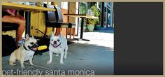 Information about pet-friendly accommodations, boutiques and dining in Santa Monica, California