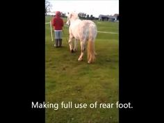 Aloe Vera Products and Horse foot abscess Aloe Vera, Horses, Pets, Youtube, Animals, Products, Animals And Pets, Animales, Animaux