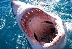 We're gonna need a bigger tv #SharkWeek