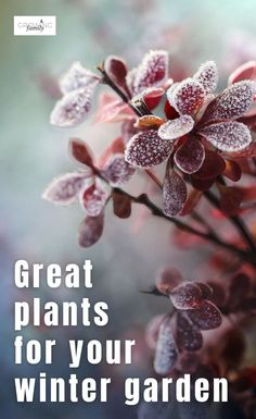 Is your winter garden in need of a boost?  This guide to the best winter plants will help you add interest and colour to give it a lift! #gardening #gardeningtips #growingfamily Plants, Planting Flowers, Foliage Plants, Easy Garden, Winter Garden, Winter Plants, Gardening For Beginners, Garden, Gardening Tips