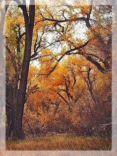 Hidden Autumn by CarissaLynn.deviantart.com