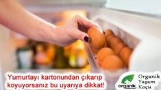 Store food in the fridge, however, there are some food items that you should never store in the refrigerator despite such popular belief Koch App, How To Store Tomatoes, Food Spoilage, How To Cut Avocado, Jam And Jelly, Acorn Squash, Types Of Food, Food Items, Food To Make