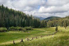 Near Mount Baldy, AZ in the White Mountains
