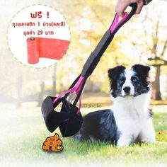 จัดเลย  อุปกรณ์เก็บมูลสัตว์เลี้ยง ที่ตักอึหมา แมว สีชมพูแถมฟรีถุงพลาสติก(คละสี)  ราคาเพียง  369 บาท  เท่านั้น คุณสมบัติ มีดังนี้ ตัวช่วยทำความสะอาดมูลสัตว์ แข็งแรง ใช้งานง่าย น้ำหนักเบา พกพาสะดวก Outdoor Power Equipment, Pet Supplies, Pets, Pet Products, Garden Tools, Pet Accessories, Animals And Pets