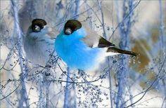 Cute birds かわいい小鳥たち