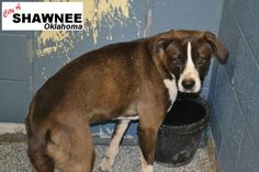 Shawnee OK Animal Shelter Online Shelter