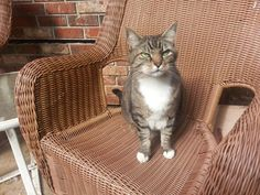 This funny-faced little girl is Doshia, holding court on the front porch.