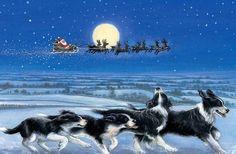 Christmas Border Collies