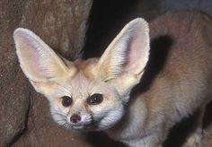 Nixon looks untrustworthy even as a fox.