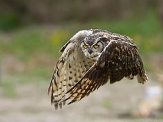 Great interview with Vince Maidens, an animal/owl/bird/dog photographer from Creemore, Ontario, Canada. Includes 10 of his best photos!