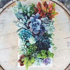 Jardin Vertical de coutume succulentes-12 x par SucculentWonderland
