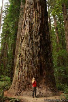 Stout Memorial Grove Jedediah Smith Redwoods State Park