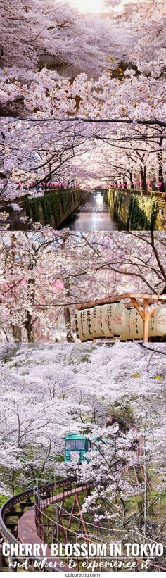 Where To Experience The Cherry Blossoms In Tokyo
