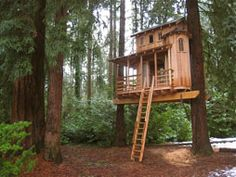TreeHouse Workshop. One tree or two.