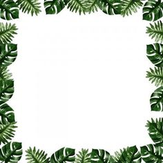 Tropical Border Frame Plant Monrea Plant Icons Frame Icons Border Png Transparent Clipart Image And Psd File For Free Download Framed Plants Tropical Frames Plant Icon