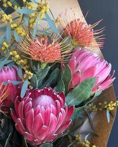 Protea, my favorite flower Protea Art, Protea Bouquet, Protea Flower, Flora Flowers, Tropical Flowers, Wild Flowers, Bouquets, Flower Names, Flower Art