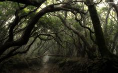 Dark Forest Backgrounds | Misty dark forest wallpaper