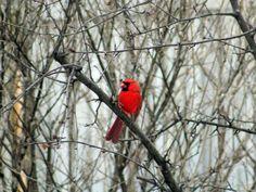 Best Bird Food to Attract Your Favorite Birds - Fleeting Architecture