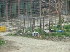 Witness of the silent suffering: A stray's life in Romania: În spatele gratiilor/ Behind bars Behind Bars, Romania, Life
