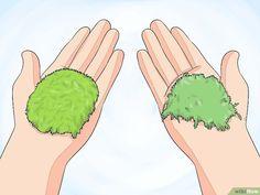 Moos anpflanzen – wikiHow