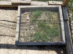 Frame up some metal hardware cloth to allow fresh greens to grow in the chicken coop without being uprooted by the girls.