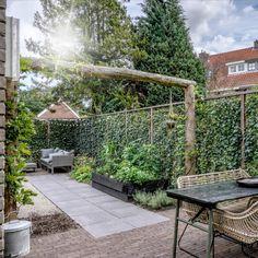 Small City Garden, Home And Garden, Privacy Hedge, Back Garden Design, Outdoor Living, Outdoor Decor, Terrace Garden, Back Gardens, Next At Home